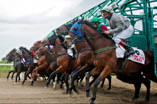 horse racing budapest